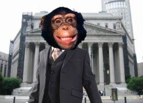 Tommy the Chimp Seeks Legal Recognition of Personhood